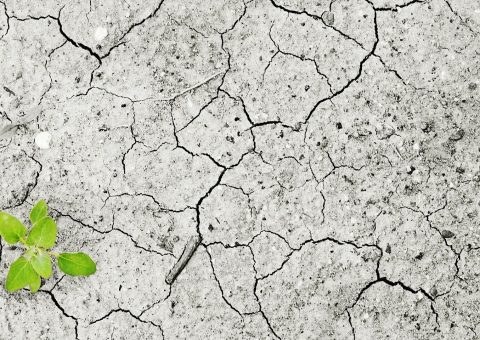 Dry cracked earth with an emerging green sprout