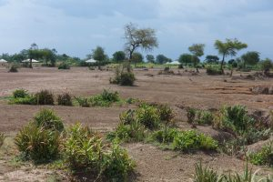 Land erosion and bare soil with sparse plants near a village