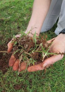 Plant species and soil at one the field sites