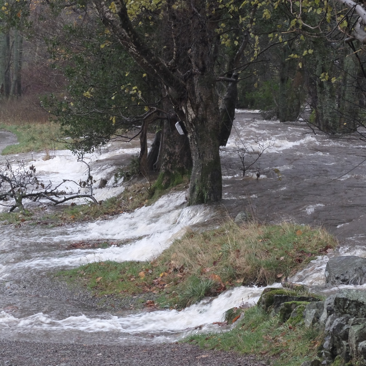 Flood water gushing over from stream passed row of trees onto bank